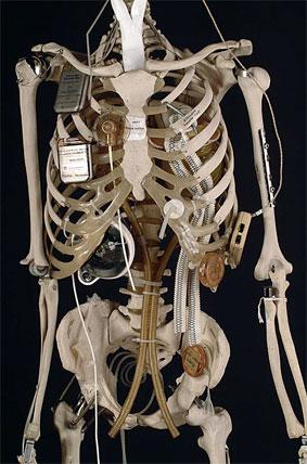 Plastic male skeleton