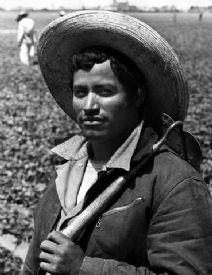 Thumbnail image of the Bracero Program: A Historical Investigation resource